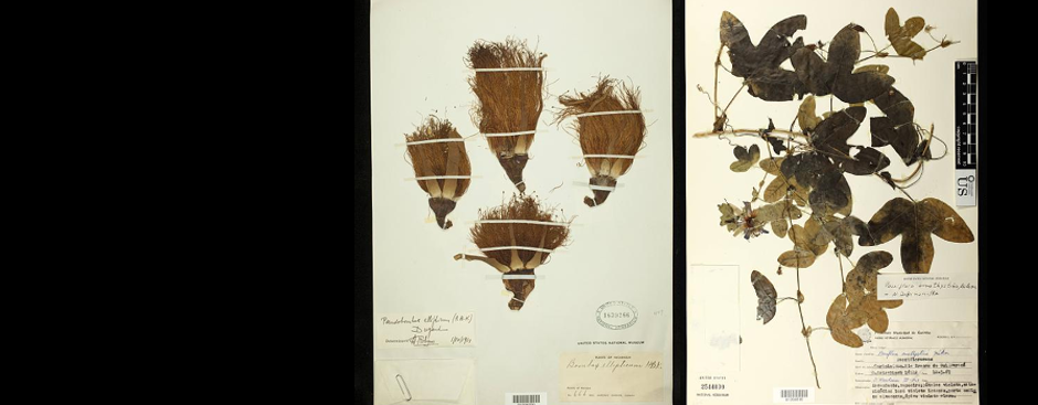 U.S. National Herbarium