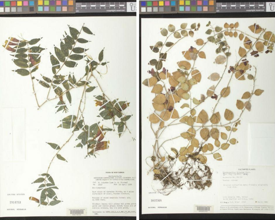 U.S. National Herbarium