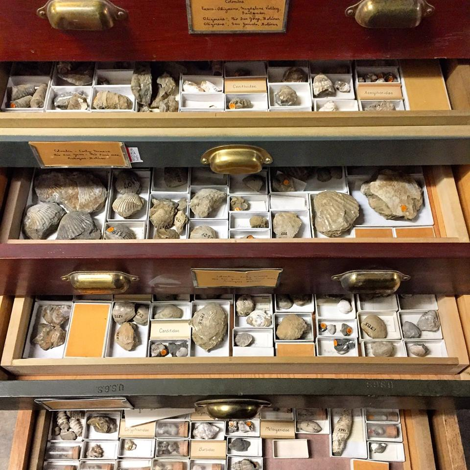 Paleobiology drawers, representing expeditions